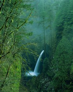 The near-vertical walls on the Oregon side of the Columbia River Gorge have more waterfalls sprouting from them than anywhere else in North America.