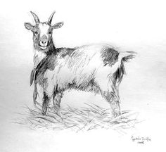 Goat -Study by *ZsofiaGyuker on deviantART