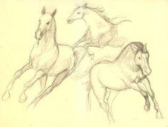 kresba 02-05 skica koni