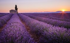 Lavander sunrise by Stefano Termanini on 500px
