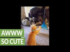 Kitten Teaches Dog How to Play With Feather Toy