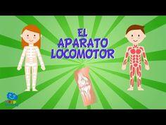 EL APARATO LOCOMOTOR | Vídeos Educativos para Niños - YouTube
