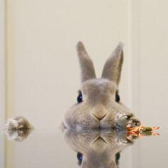 ・ ・ ・ なんだか  美味しい香りがする ・ ・ ・  #olive#オリーヴ#minirex#webstapets #websta #cuteanimals #cuteanimal #ふわもこ部 #webstapick #webstagram #weeklyfluff #webstapic #cutepetclub #rabbit #bunny #whpwildthings #instagram #instagramjapan #igersjp#animalsco