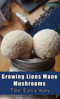 Growing Morel Mushrooms, Bbq Lighter, Mushroom Cultivation, Brown Rice Flour, Lion Mane, Mini Fridge, Container Garden, Garden Planning, Lions