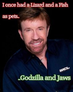 Cause he is Chuck Norris  Want more business from social media? zackswimsmm.tk