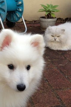 The Oblivious Fluff | The 100 Most Important Puppy Photos Of All Time