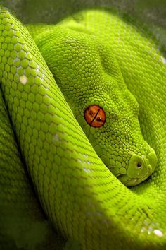 animal | snake | green