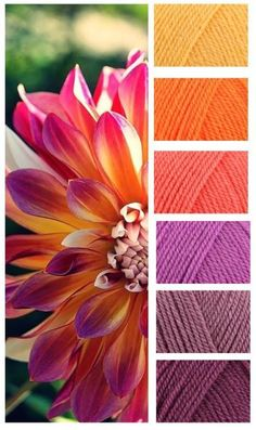 Color inspiration for a warm quilt in yellows, oranges and purples. Colour names are: Sunshine – Jaffa – Shrimp – Magenta – Grape – Plum! Yarn Color Combinations, Colour Schemes, Color Patterns, Colour Pallette, Color Palate, Pantone, Design Seeds, Yarn Colors, Colours