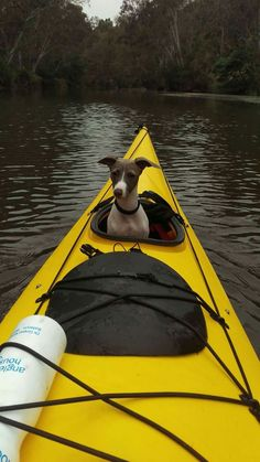 Kayaking - Tap the pin for the most adorable pawtastic fur baby apparel! You'll love the dog clothes and cat clothes! <3