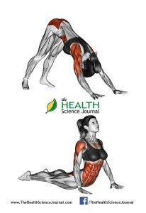 All About Abs – 66 Exercises in Pictures! Bodybuilding, Calisthenics & Yoga…