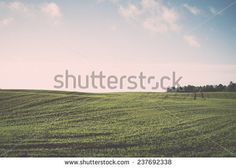 beautiful freshly cultivated green crop field in the countryside - retro, vintage style look