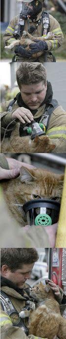 Спасают рыжую кошку