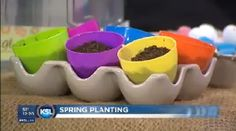 #Spring Planting #Easter Grass Fun and Easy #DIY!    Great indoor activity to do with #kids or grandkids!
