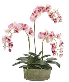 Natural Decorations, Inc. - Orchid Phalaenopsis Pink |  Blackstone Terracotta