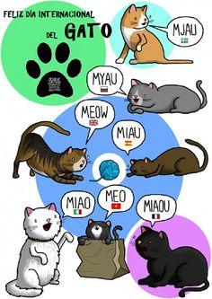 Día del gato El Día Internacional del Gato se celebra todos los años el 20 de febrero