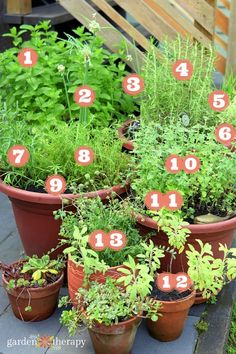 perennial herb garden map - Perennial herbs grow well in containers and so you can grow them anywhere! But if you want them to come back year after year, here is how to grow a perennial herb container garden using the right soil, plants, and growing conditions. Plus, you'll learn which herbs to plant for the best results.#gardentherapy#gardening#herbs#growingherbs#garden#containergarden#perennials