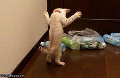 ペットボトルと戦う猫