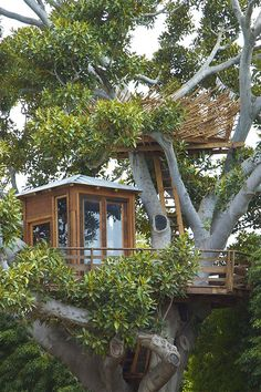 I would play in this tree house ...  I want to climb to the nest at the top!