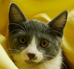 Poko is available for adoption! Call us at (858) 676-1600!