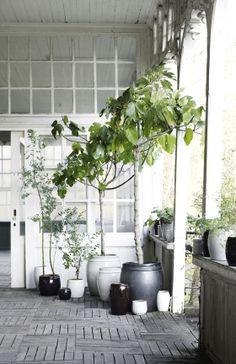 life as a moodboard: Tine K home | krukker med planter og uden… spottet af Design Circus
