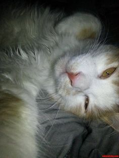 Just my kitten taking a selfie - http://cutecatshq.com/cats/just-my-kitten-taking-a-selfie/