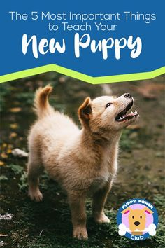 Puppy training made simple. If you have a new puppy, you'll want to know the 5 most important things to teach your new puppy. These puppy training tips will help your puppy grow into a loving and obedient dog. #PuppyPowerClub #Puppies #puppytraining #dogs