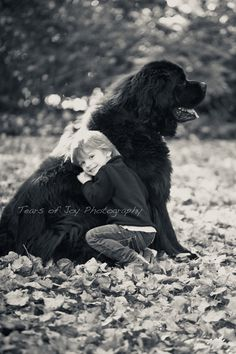 Newfoundland dog--so fortunate to have loved one of these during my childhood...