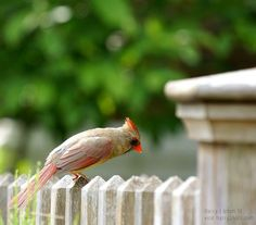 """Her"" - photo taken by Harry Lipson III (harryShots.com), via Flickr"