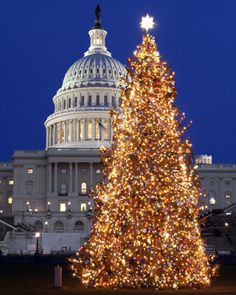 One of the Colorado trees on the board 'Guess!' is the real 2012' US Capitol Christmas Tree! Repin the tree you think we'll be taking to Washington!