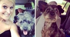 Woman Adopts Dying Dog To Make His Final Days As Happy As Possible   Bored Panda
