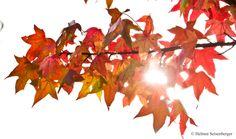Herbstblätter. Gedicht und Fotografie