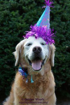 SUGAR 13th Birthday Pawty Hop