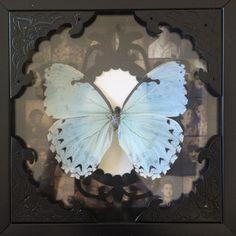 Morpho Butterfly, Moth, Animals, Animales, Animaux, Animal, Animais
