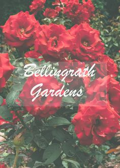 The Beautiful Bellingrath Gardens and Mansion in Theodore Alabama