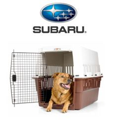 ASPCA | Car Travel Tips for Traveling with a Pet