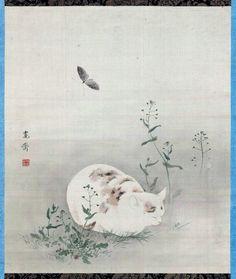Chat et papillon - Mori Kansai Japon - Museum of Fine arts, Boston Japanese Artwork, Japanese Painting, Japanese Prints, Anime Neko, Neko Neko, Art And Illustration, Asian Cat, Oriental Cat, Japanese Cat