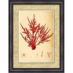 Brad Bary Seagrass - Framed Giclee Print at HSN.com.