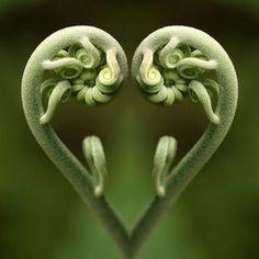 La-magie-de-Fibonacci (4)