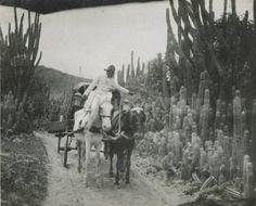 Camino Caracas - La Guaira 1900-23