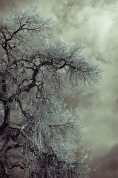 Stunning photograph of an old tree. Beautiful even in their last days
