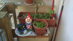 Spinach, radish, bean, galric and Plato the gnome!
