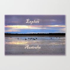 Lake, Swans, Nature, Karma, Colours, Photography, Typography, Australia.