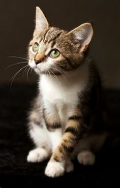 Cute Cats And Kittens, Cool Cats, Kittens Cutest, Pretty Cats, Beautiful Cats, Animals Beautiful, Pretty Kitty, Baby Animals, Funny Animals
