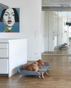 Letto Daybed hundeseng i eksklusivt design - Petlux Dogs Of The World, Daybed, Ben, Interiors, Design, Accessories, Pull Out Bed, Day Bed, Daybeds