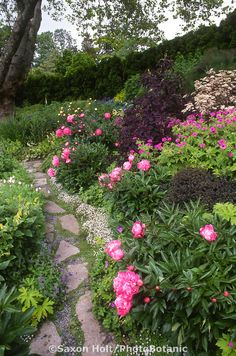 Stepping stone path through perennial garden with peonies