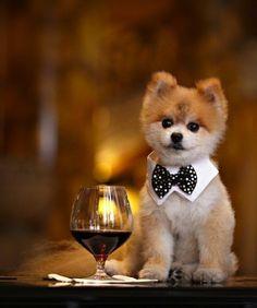 cute dog - Gentleman @Trish Papadakos Papadakos Luce Baby Smerf!