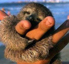 If this little cutie doesn't make you want to go to Costa Rica, nothing will!