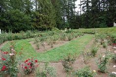 Yaddo   Gardens -  Rose  Garden