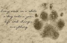 I've had dogs all my life and this never ceases to be true. http://rileekennels.com