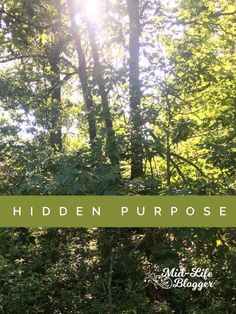 Hidden Purpose ~ Mid-Life Blogger